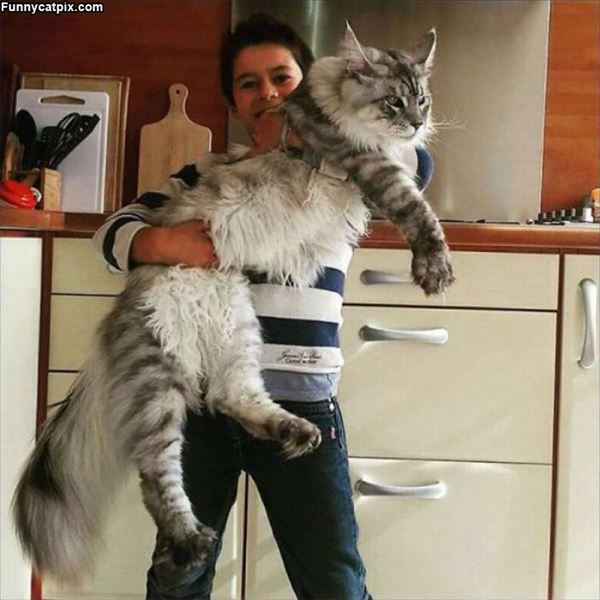 This Is A Big Cat