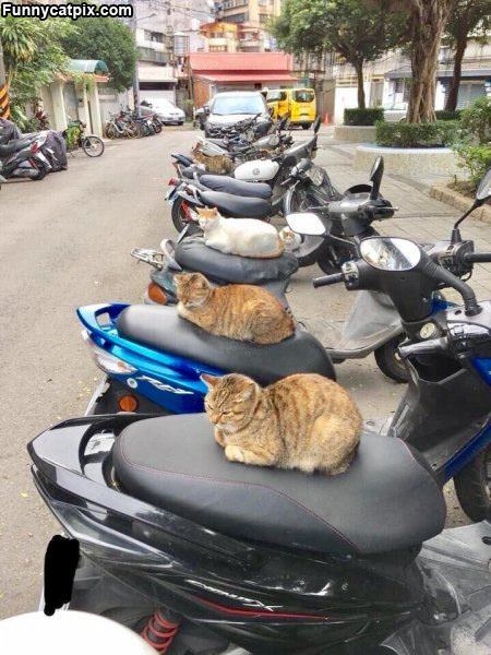 This Is A Cat World