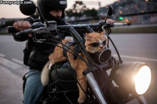This Is How We Ride