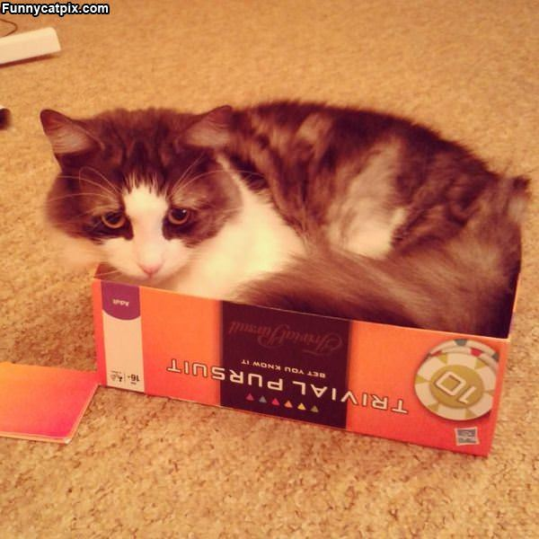 This Is My Box