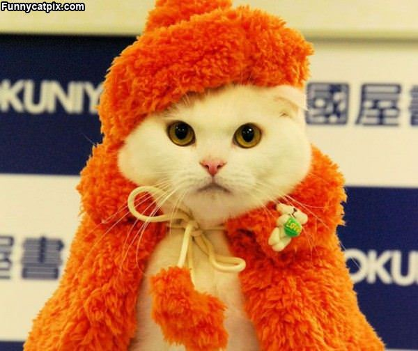 This Is My Cat Suit