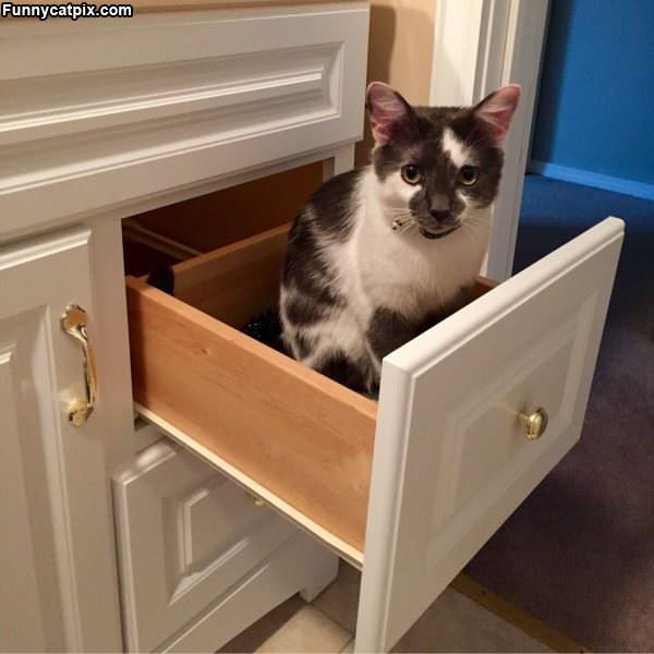 This Is My Drawer Now