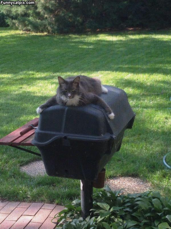 This Is My Grill Now