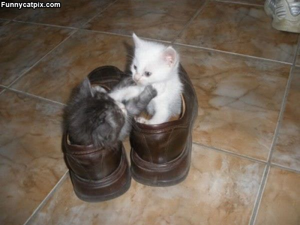 This Is My Shoe