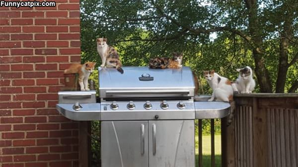 This Is Our Grill Now