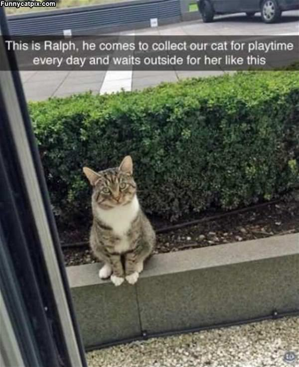 This Is Ralph