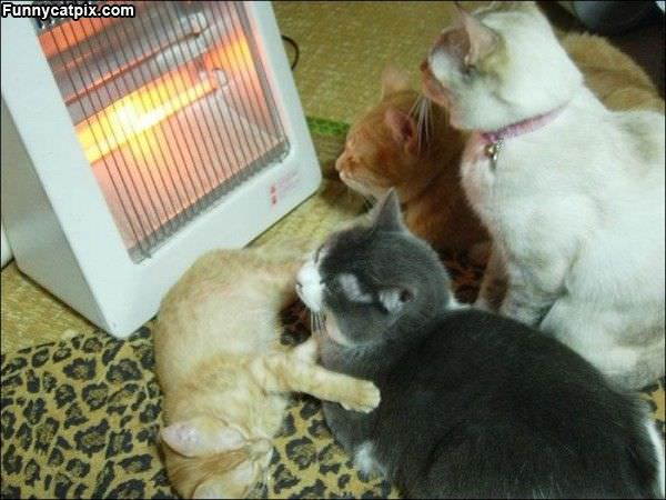 This Is The Warms