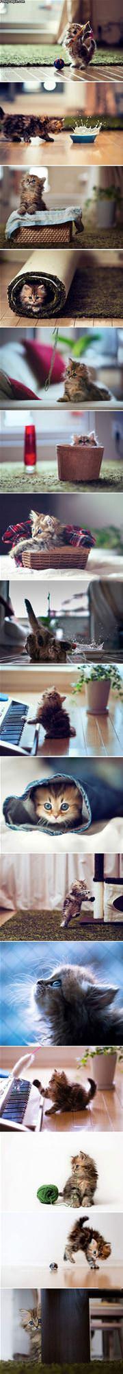 This Kitten