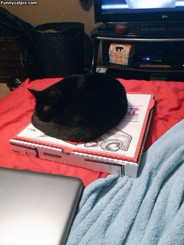 This Pizza Box Is Great