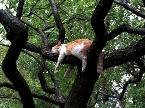 This Tree Is Awsome