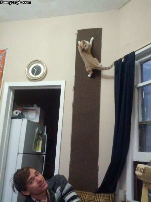 This Wall Is For Climbing