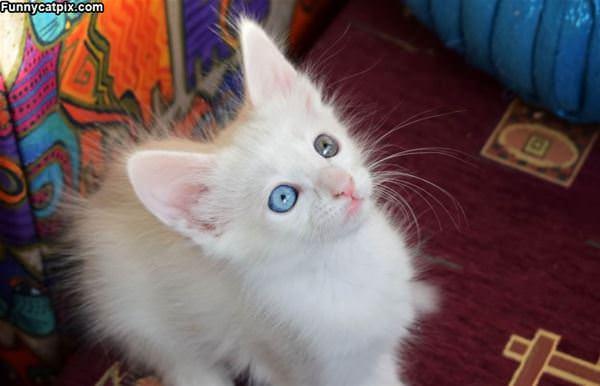 Those Cute Eyes