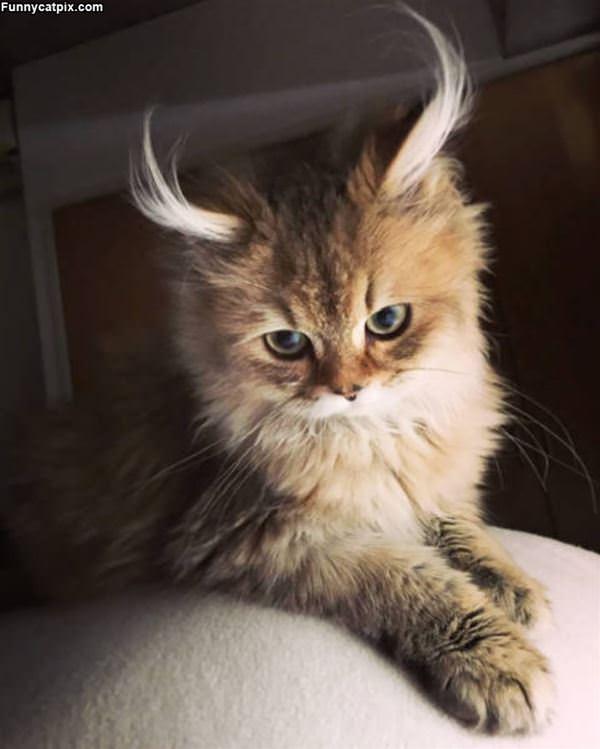 Those Fuzzy Ears