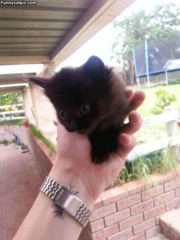 Tiny Hand Cat