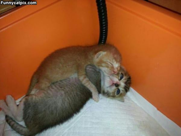 Tiny Sleeping Kittys