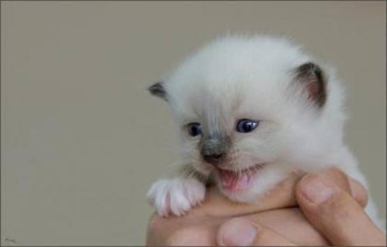 Tiny little kitten