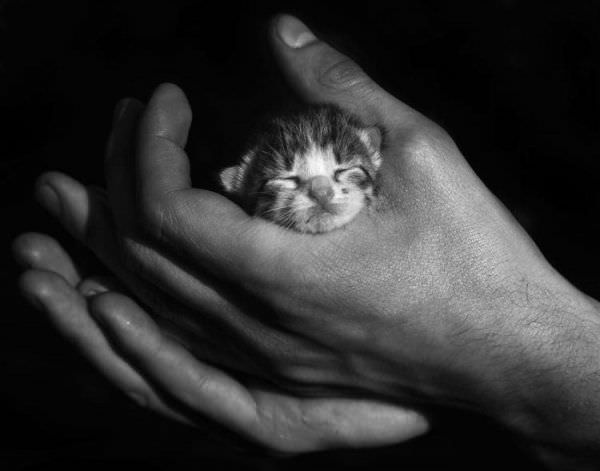 Tinyest Kitten