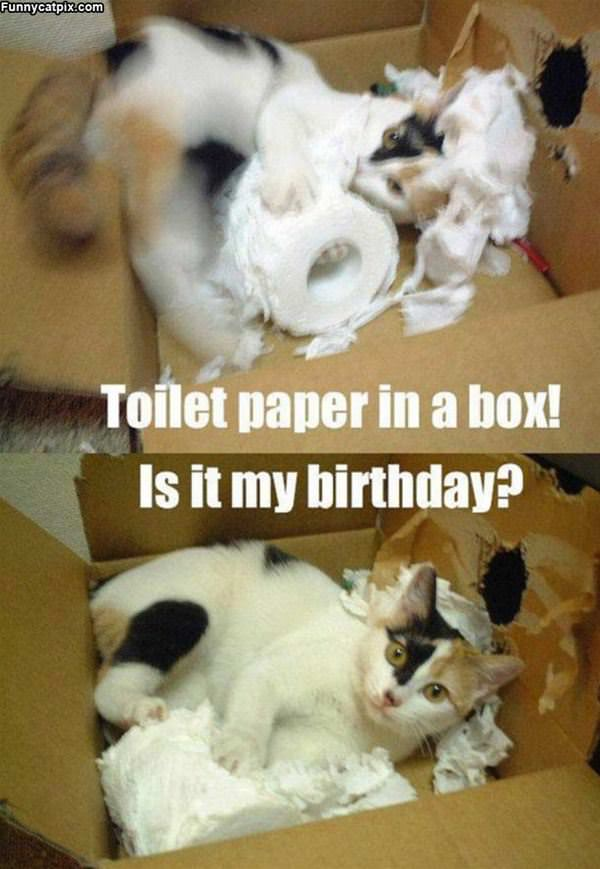 Toilet Paper In A Box