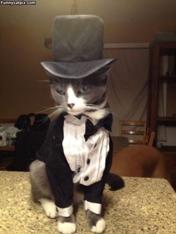 黑猫神探 - 雪山 - .