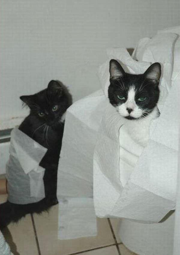 Tp Cats
