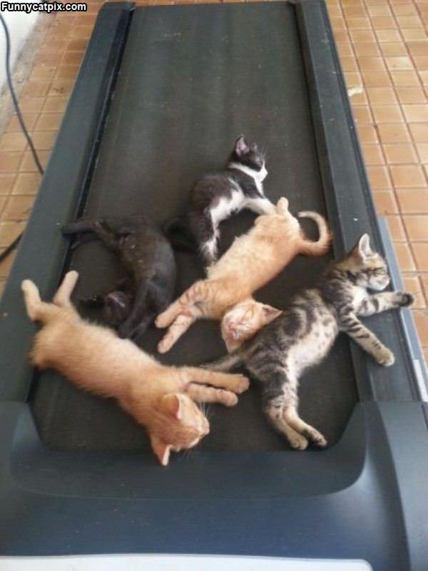 Treadmill Cats