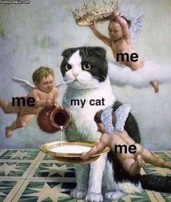 Treat My Cat
