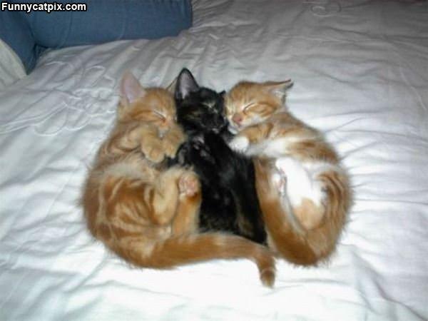 Triple Sleeping Kittens