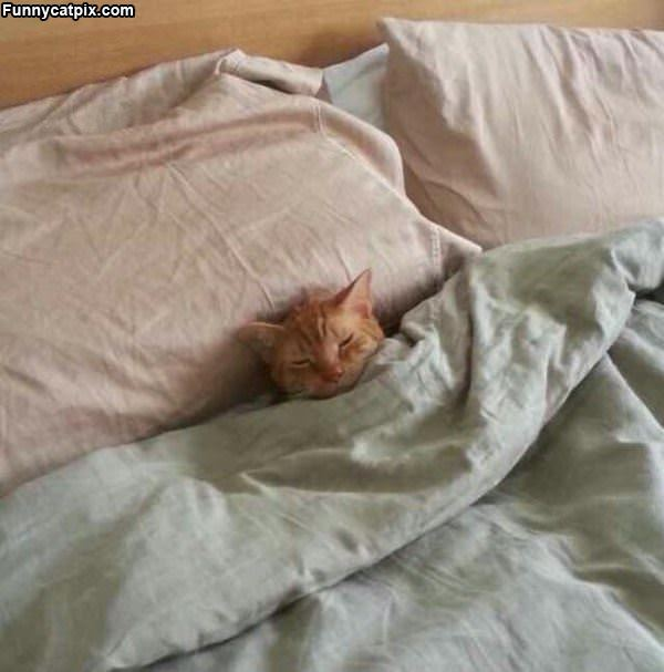 Tucked In Nicely