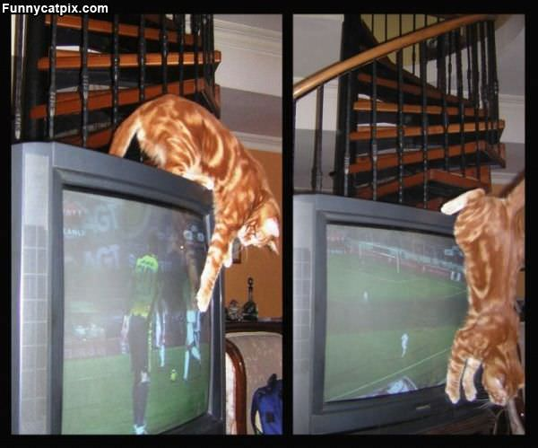 Tv Attacker