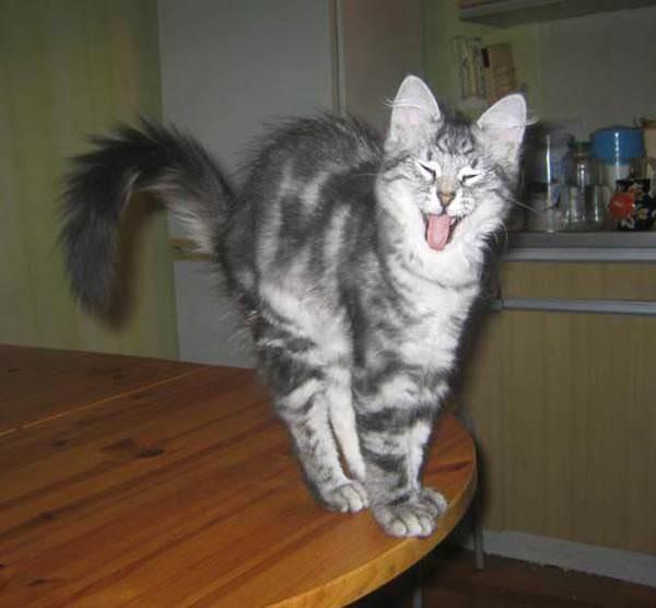 Funny Yawns