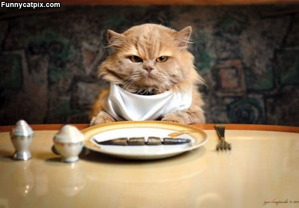 Ultra Fine Dining