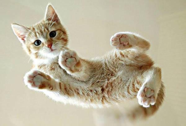 Under Kitten