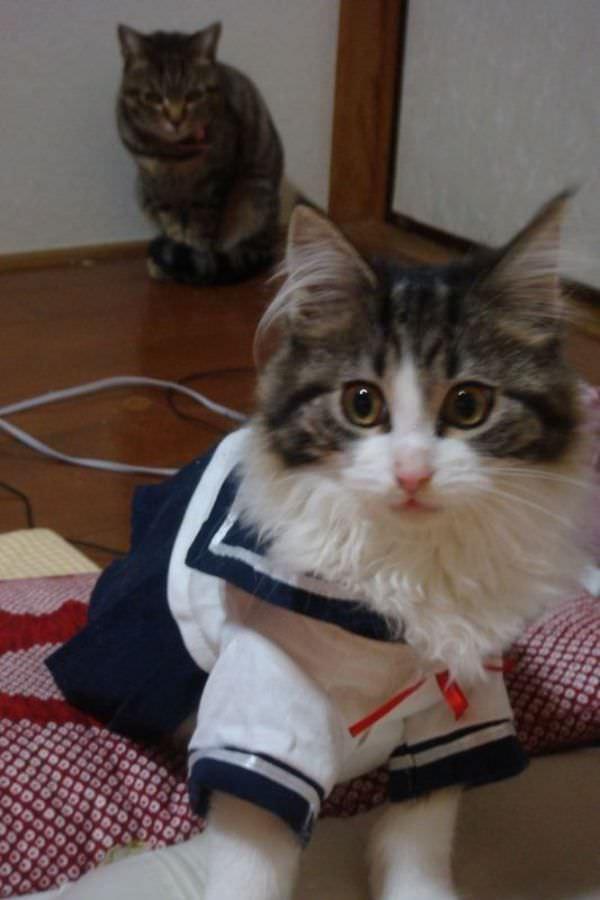 http://www.funnycatpix.com/_pics/Uniform.jpg