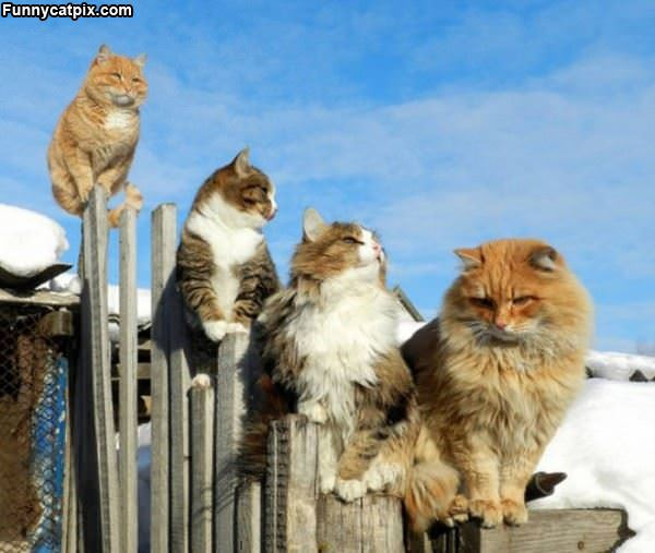 Up On The Fence