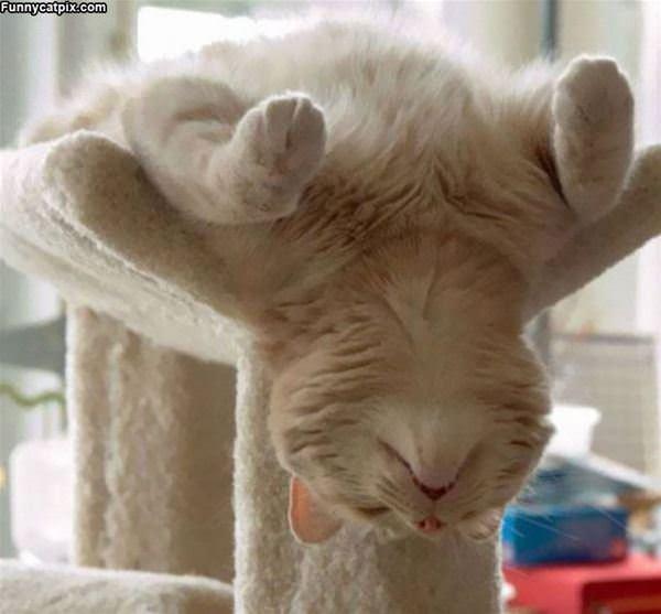 Upside Down Nap