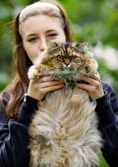 Very Mad Cat