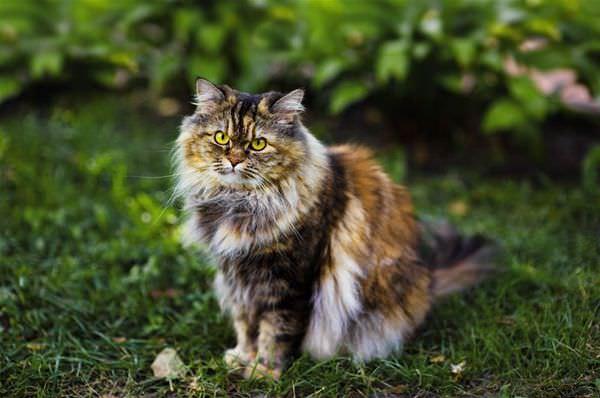 Very Scruffy Cat