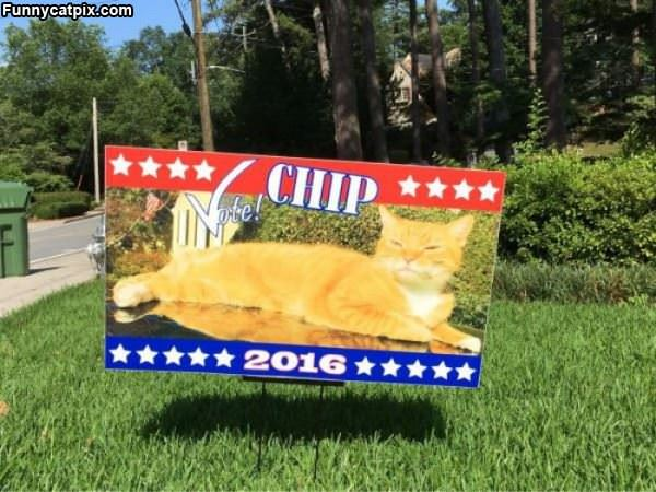Vote For Chip