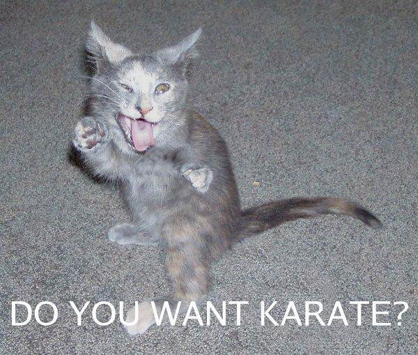 Clan Applications Want_karate_cat
