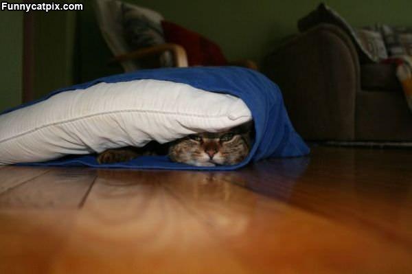 Warm Pillow