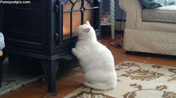 Warmest Spot