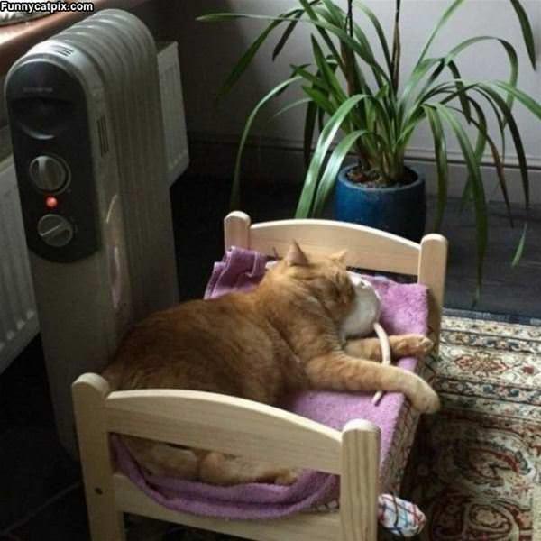Warmest Spot In The House