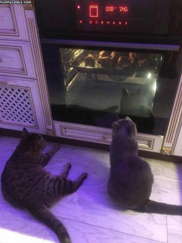 Watching Dinner