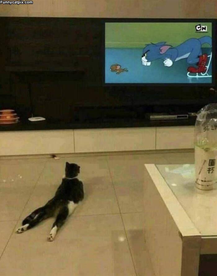 Watching Everything