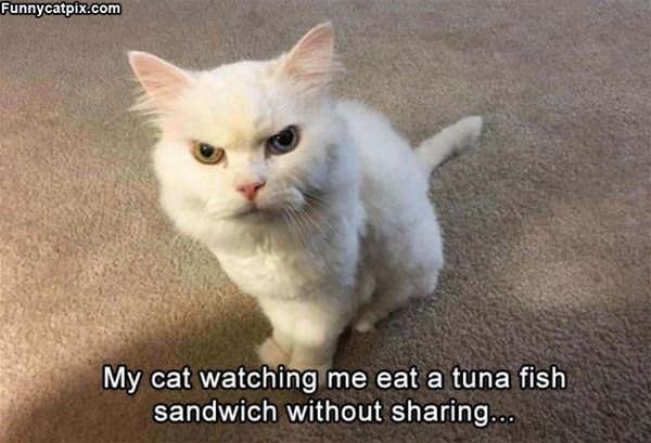 Watching Me Eat Tuna Fish