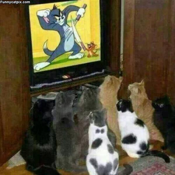 Watching My Show