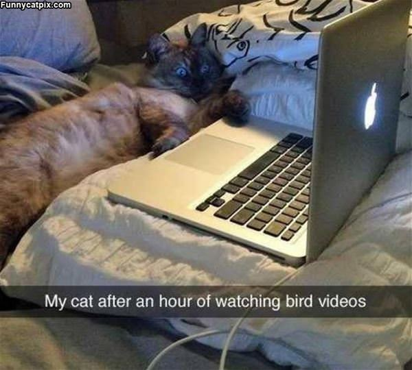 Watching Some Bird Videos