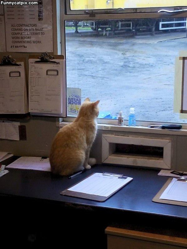 Watching Waiting