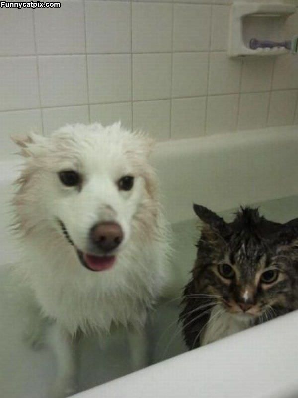 We Are Having Bath Time