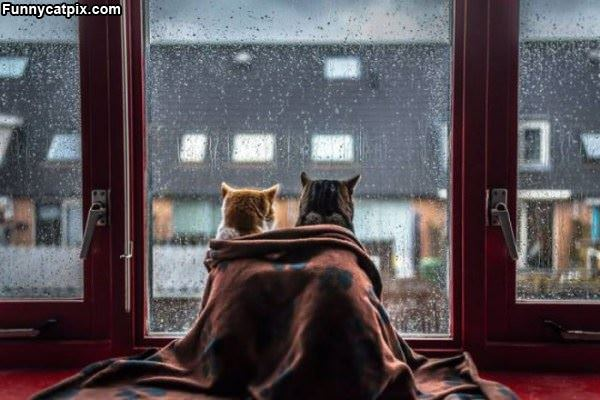 We Are Watching The Rain Come Down